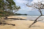 Red Frog Beach, Bastimentos Island, Panama