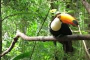 Parque das Aves, Avenida das Cataratas, Vila Yolanda, Foz do Iguaçu