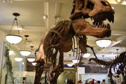 American Museum of Natural History, Central Park West, New York, NY