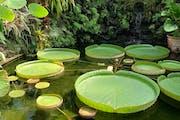 Ischia: Giardini la mortella
